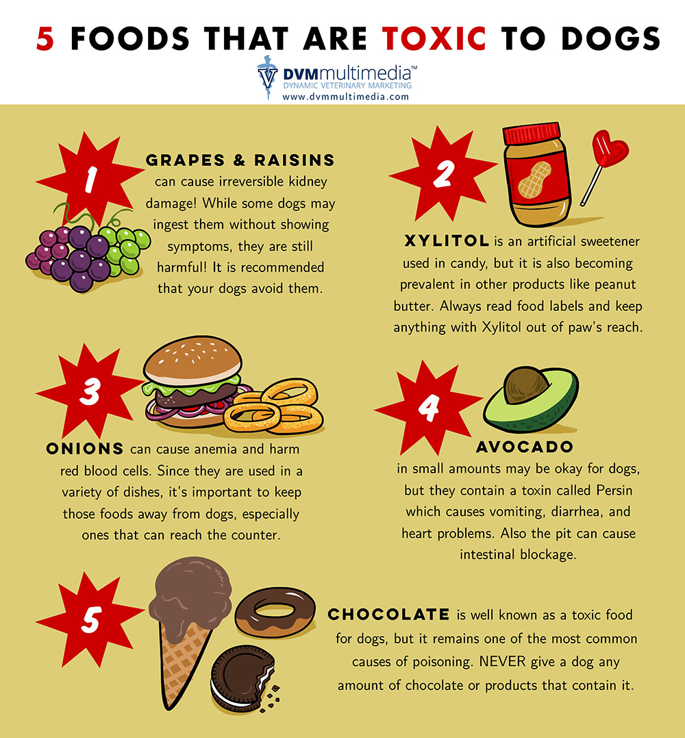 5 Foods That Are Toxic To Dogs In Waupaca, WI